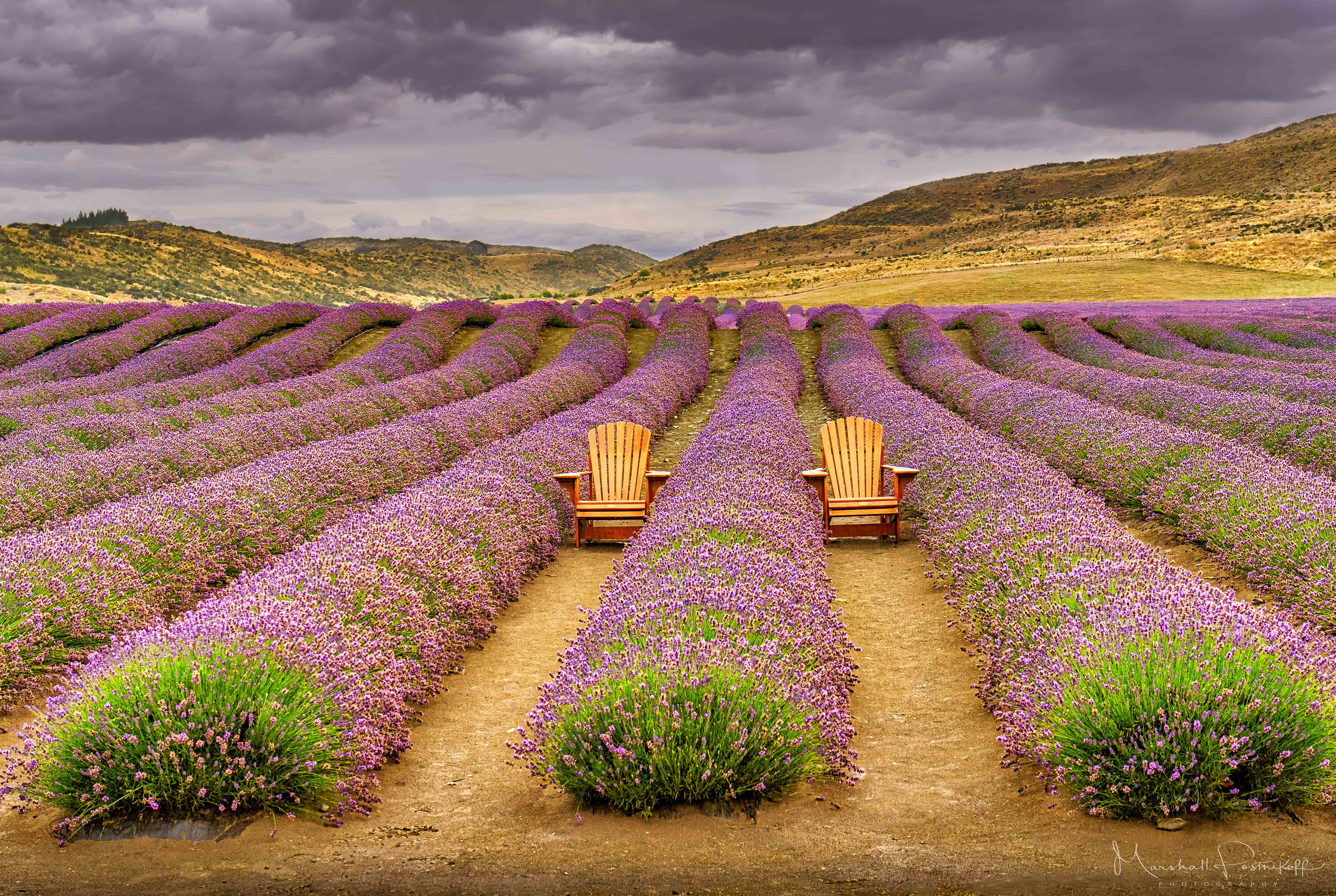 Photo of fields of lavender by Marshall Postnikoff